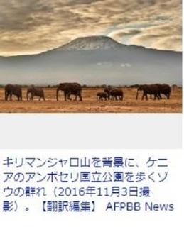 アフリカ・ゾウ・キリマンジャロ.JPG