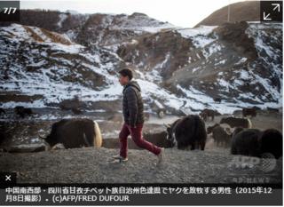 チベット人・ヤクの放牧1・.PNG
